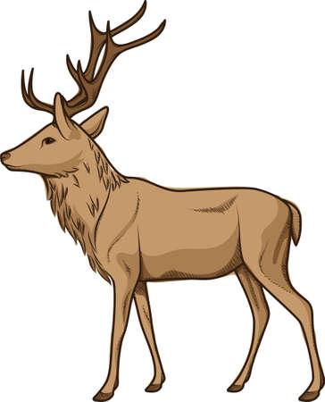 male deer Reklamní fotografie - 79145034