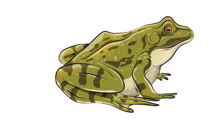 カエル 写真素材 - 79145052