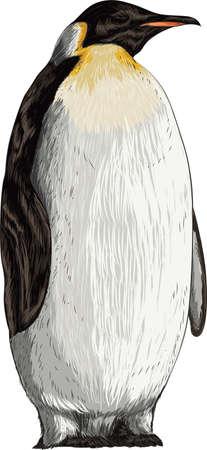 penguin Ilustração
