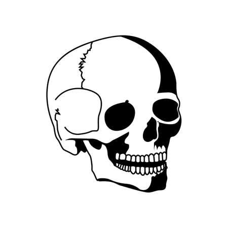 인간의 두개골 일러스트