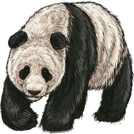 판다 곰 일러스트