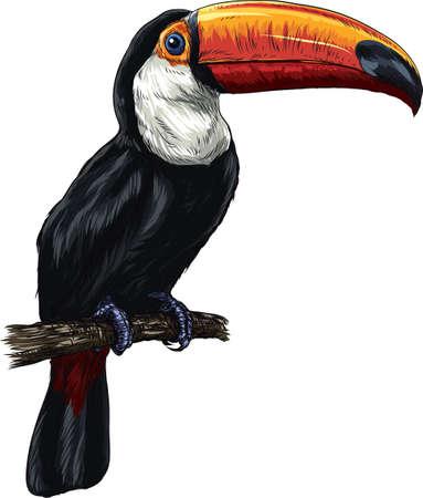 toucan Ilustrace