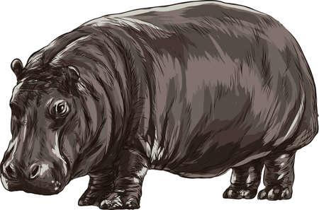 hippopotamus Иллюстрация