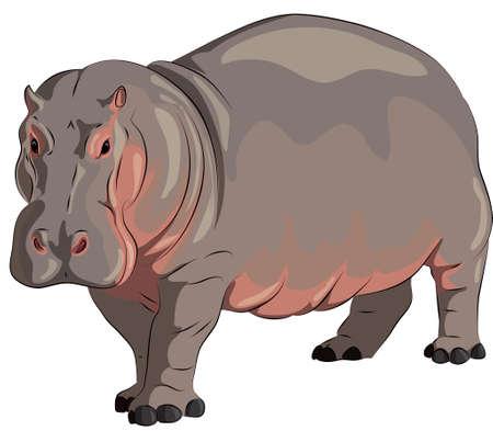 hippopotamus 向量圖像