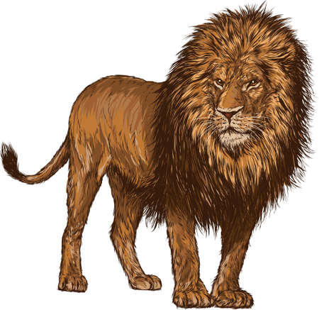 lion Stock Vector - 79145817