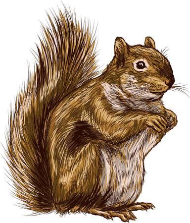 squirrel Ilustrace
