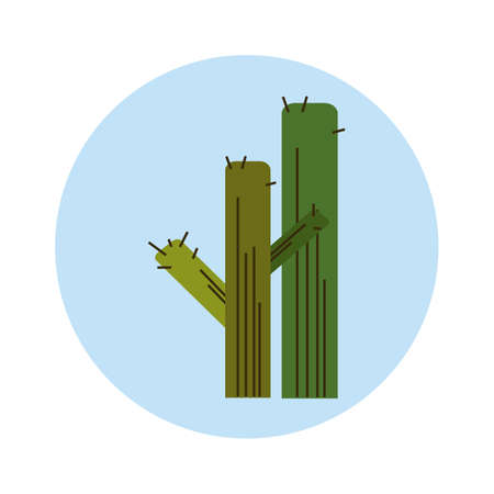 Kaktus Standard-Bild - 79218191