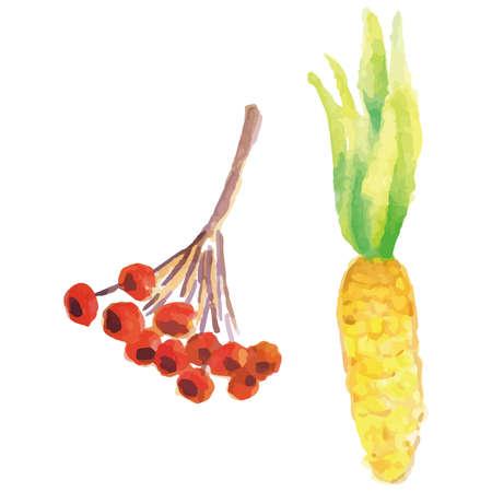 berries and corn