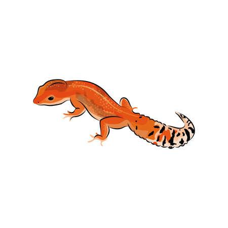 gecko Reklamní fotografie - 79261272