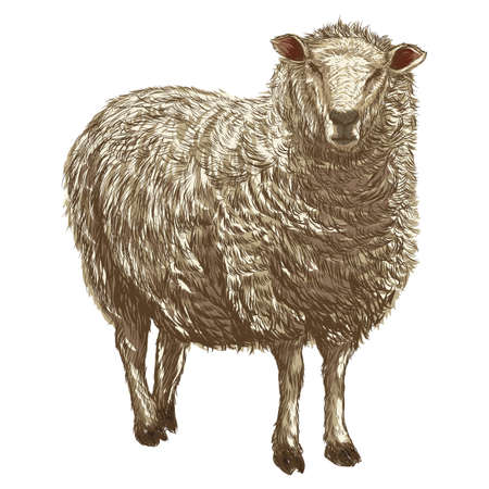 sheep Banco de Imagens - 79814636