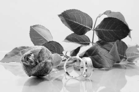 bw: Rose and two wedding rings - b-w image