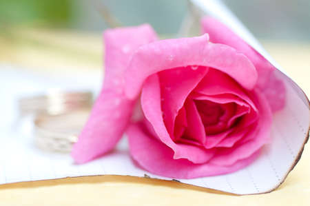 Wet pink rose and two blurred wedding rings photo