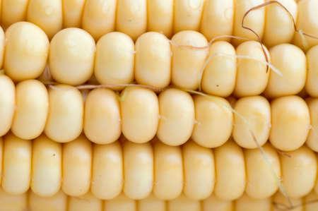 Close up of a corn photo