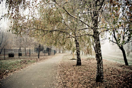 Pedestrian path through park with yellow fallen leaves photo