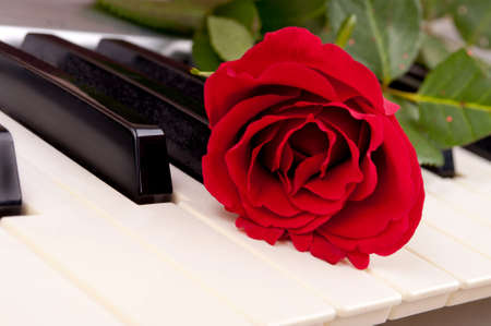 Close-up shot of red rose on the piano keyboard photo
