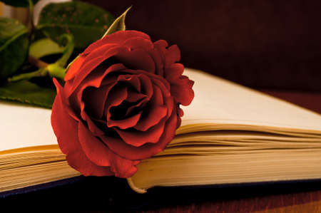Red rose on the open book in the dark photo