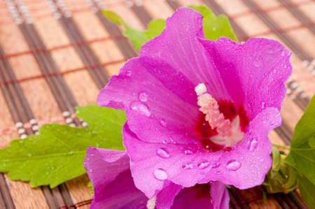 Pink wet hibiscus on the mat photo
