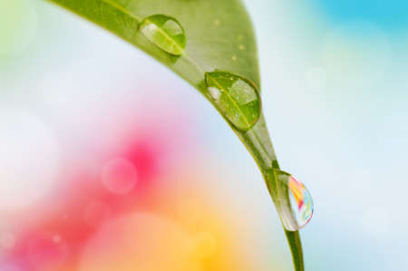 Colorful background with water drops on the leaf photo