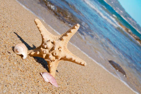 Starfish on the sandy beach photo