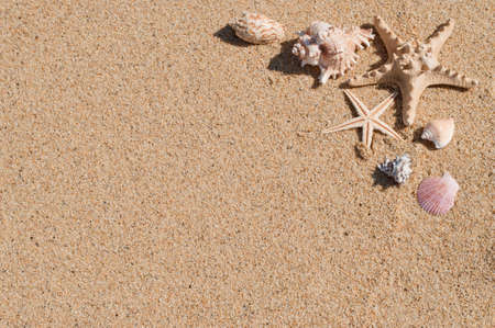 Sandy background with seashells in the one corner photo