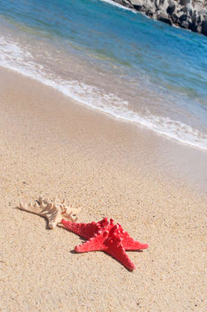 Two starfish on the sandy beach photo