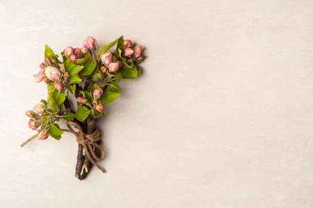 branches of a blossoming apple tree on a light.Top view