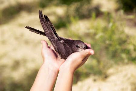 Little bird in a childrens hands