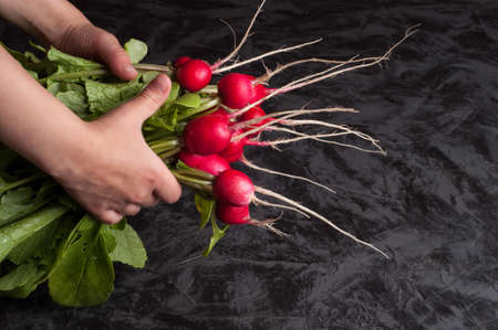 A bunch of radishes in hands on a dark background 版權商用圖片