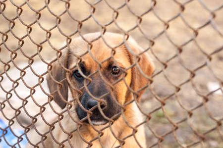 Little brown puppy behind bars.