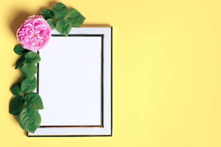 Natural beauty background with white frame and white rose flower. Summer beauty top view background. Ligth background.