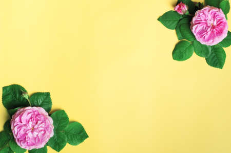 Flowers composition. Roses flowers on yellow background. Spring, summer concept. Flat lay, top view, copy space 版權商用圖片