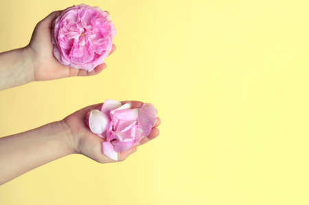 childrens hands with petals of wild rose flowers.