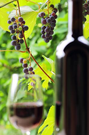 Wine bottle and glass with grape and green leaves in background . Focus on grapes , defocused bottle and wineglass. photo
