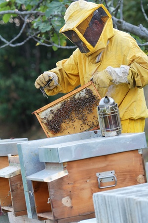 Beekeeper with smoker , beehives and honeycomb. Apiculture job. photo