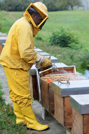 Beekeeper is smoking a beehive. Apiculture and honey. photo