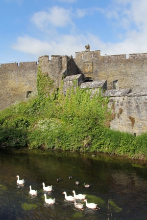 county tipperary: Detail of Cahir castle with gooses in the river. Ireland Editorial
