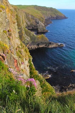 Old head of Kinsale cliffs covered by flowers in sunset light  Ireland Standard-Bild