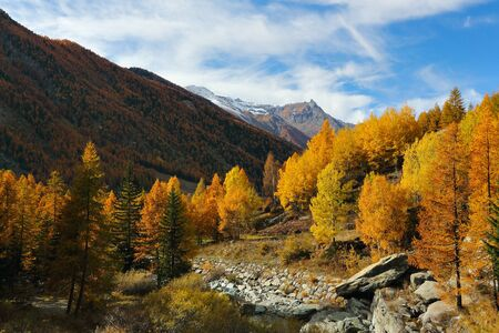 trees seasonal: Panoramic view of alpine valley with seasonal colors. Cogne , Italy