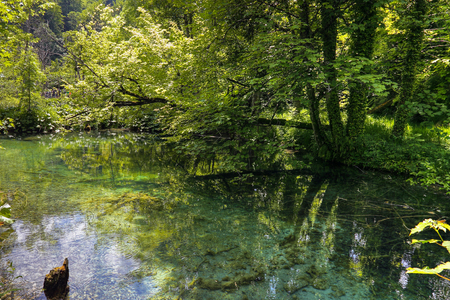 Beautiful green pond in Plitvice park