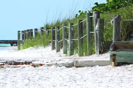 sea oats: Florida Sea Oats & Sea Grapes Stock Photo