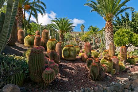 Cactuses of Canary Islands, Spain photo