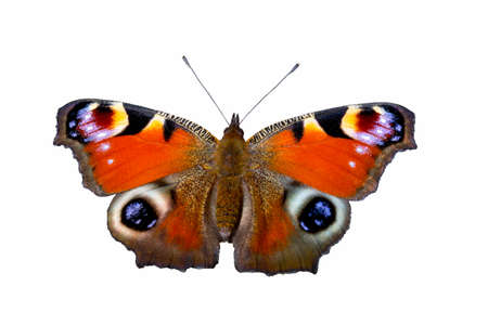 Peacock butterfly Aglais io on white background, isolated Stock Photo