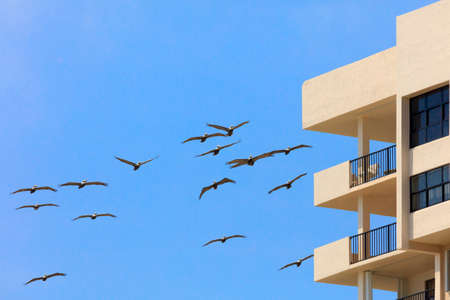 florida house: Swarm of pelicans flying around a house, Florida Stock Photo