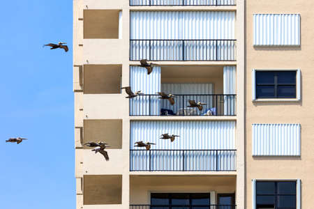 florida house: Swarm of pelicans flying around a house in florida, USA