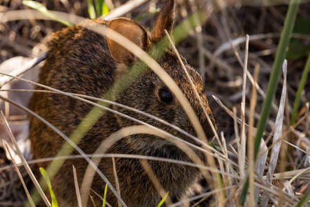 Easter bunny hiding in the grass Imagens