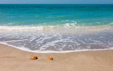 Beach, sand, shells, soft waves, horizon, blue sky, Sanibel Island, Florida, USA 免版税图像 - 96191552