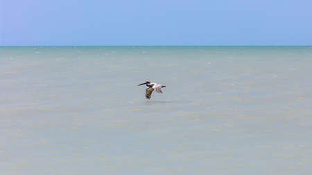 Water, blue sky and pelican, Sanibel Island, Florida, USA