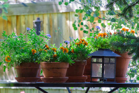 A table with potted flowers and a lantern in the back yard adding beautiful color.