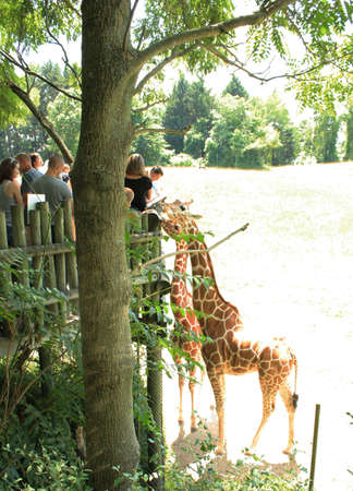 otganimalpets01: People feeding the giraffes at the zoo