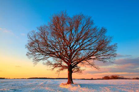 겨울에 필드에 외로운 나무